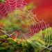Morning Dew by Bill Fultz