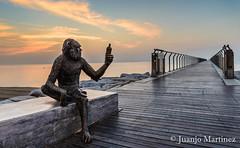 Anís del mono (Badalona) 1