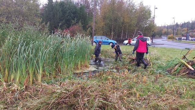 Blaenau Gwent, Pond Clearance Project, Tredegar Business Park, 16/10/2014
