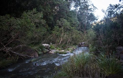 river streamscape streambed richmondvalley richmondriver grevillea northernrivers nsw australia landscape australianlandscape