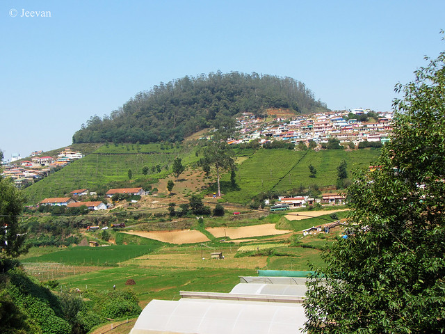 A view from my balcony overlooking Elk Hill, Ooty