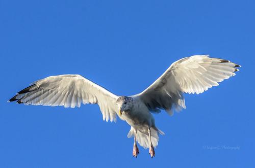 bird birds fly wings groton