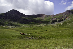 Los caballos en el valle