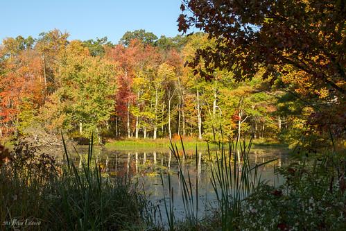 autumn fall colors leaves season landscape brian caldwell