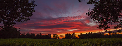 sunset nature oregon vineyards edgefield