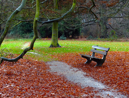 trees winter leaves bench colours