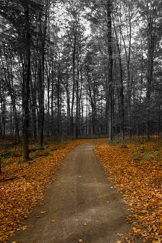 trees orange white black fall automne noir quebec arbres leafs blanc feuilles 2014 mirabel boisdebellerivière
