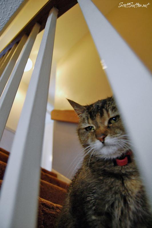Tammy the family cat