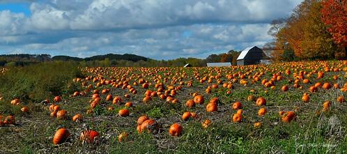 autumn trees colors clouds barn pumpkins
