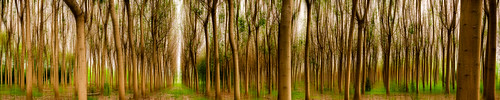 trees panorama green forest landscape