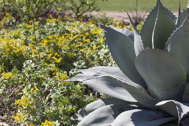 McGovern Centennial Gardens_9