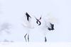 舞の鶴 - 雪の中で愛 by heng.steven