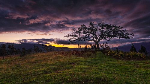 grass ecuador landscape tree fields sky sunset southamerica hill otavalo ellechero imbabura ec canon