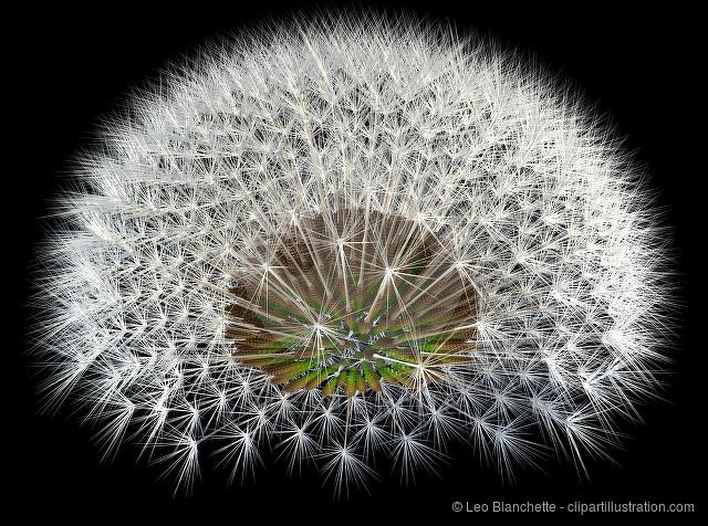 Dandelion Seeds on Black, 3d Generated Arrangement