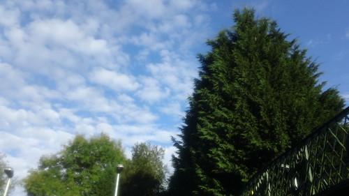 Blue sky: Ashurst station