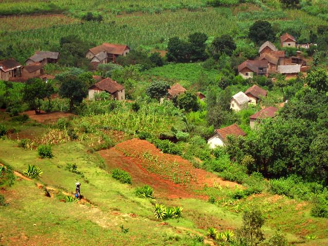 Madagascar2 - 114
