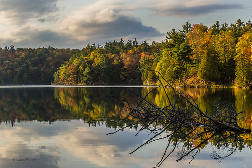 pink trees light lake canada nature water colors leaves reflections landscape shadows quebec textures gatineau canon6d