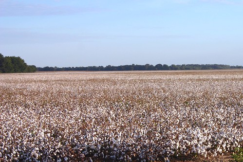 louisiana farming cotton agriculture