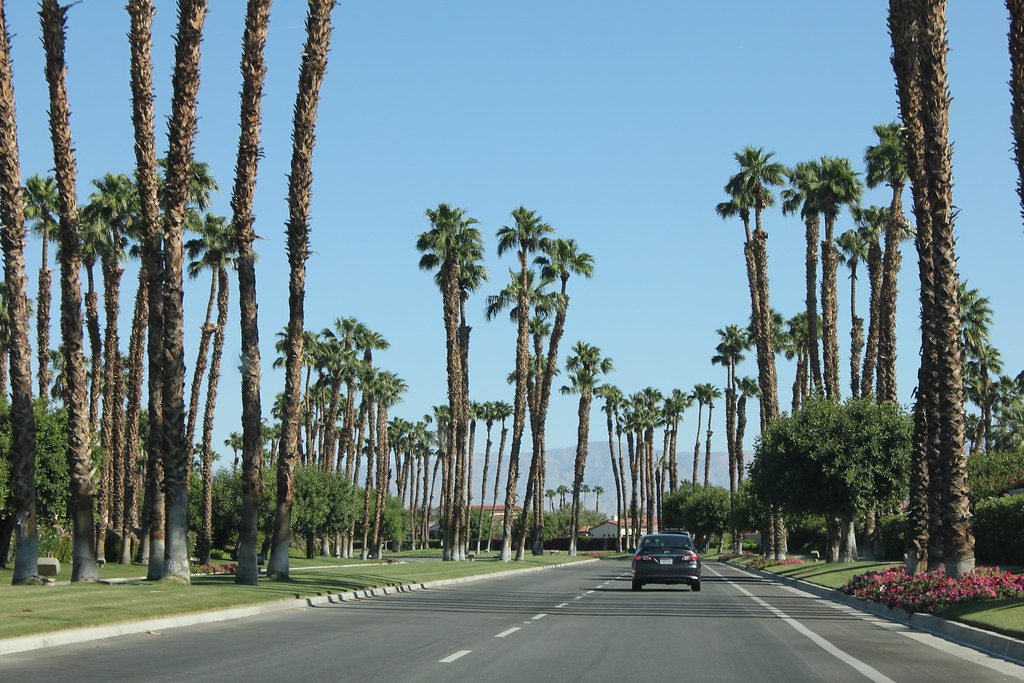 Palmy road at Palm Springs - California