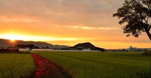 sunset japan 夕景 奈良 彼岸花 古宮遺跡