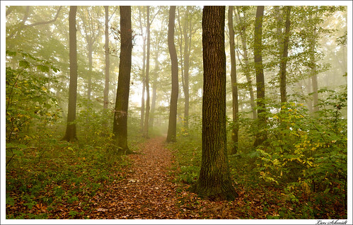 autumn fog 35mm nebel herbst wald bokehpanorama brenizermethod afsdxnikkor35mmf18g
