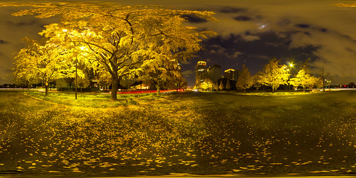 tree night city tokyo yellow