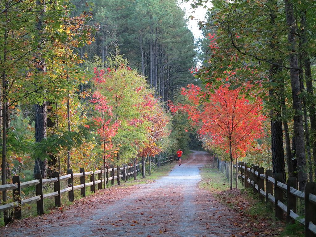 American Tobacco Trail Foliage