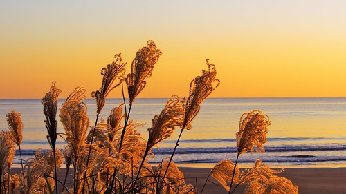 ocean sunset sea beach horizon pacificocean silvergrass