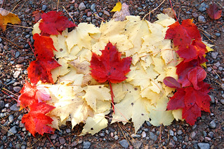 DSC00910B - The Maple Leaf Forever.... | by archer10 (Dennis)