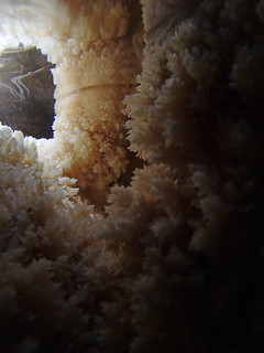 The Secret Tunnel. Under water macro. | by nicholaschipchase