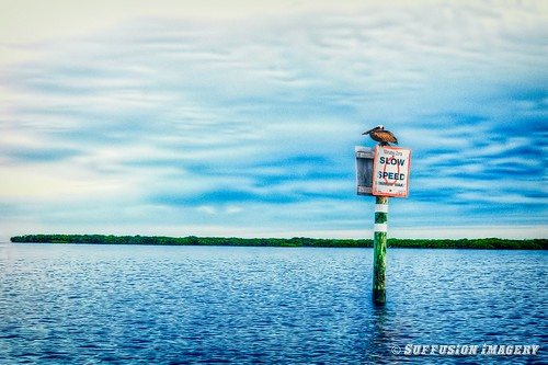 bird birds clouds sunrise stpetersburg tampa fishing unitedstates florida pelican dim hdr palmetto skyway snook sony50mm sonya550 bishopsharbor rainskywaybridge