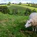 Jardin communautaire, Narbeth, Pembrokeshire, pays de Galles, Royaume-Uni