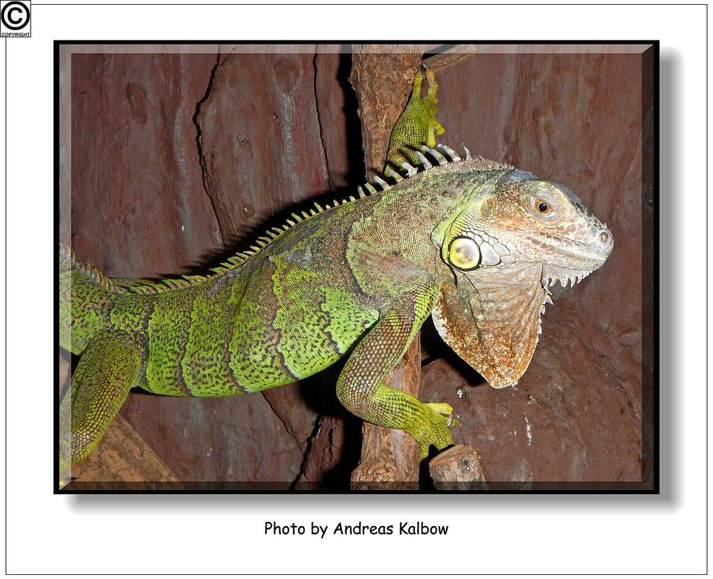 Scales Reptiles 05-2014 (43)