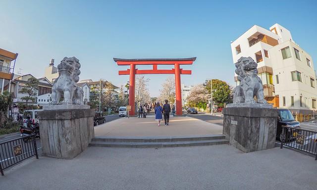 The Kamakura Dankazura 2017