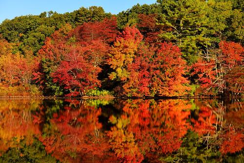 trees usa fall reflections nikon unitedstates newengland foliage rhodeisland d610 southkingstown barberpond