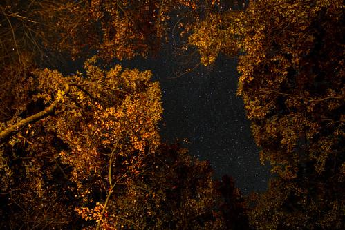 statepark autumn wisconsin forest stars woods fallcolors campfire devilslake devilslakestatepark