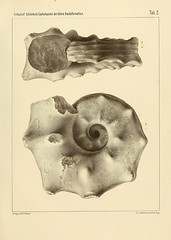 cephalopodenderb00fric_0063