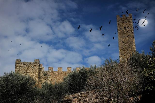 I CORVI - Castello di montecchio Vesponi