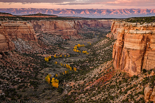 Fall in Ute Canyon | by IntrepidXJ