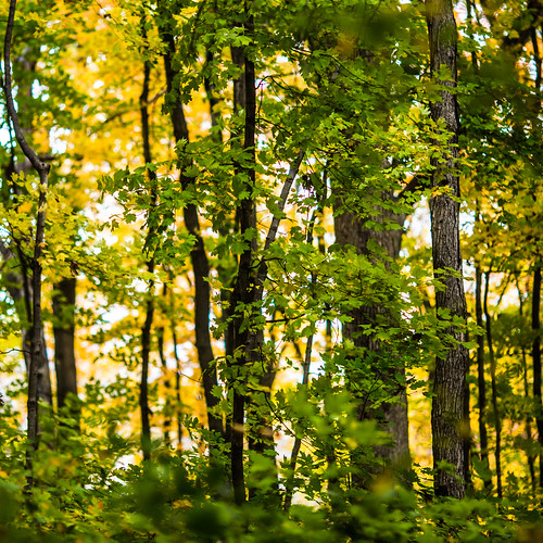autumn trees usa tree fall unitedstates unitedstatesofamerica stlouis missouri grantsfarm fav10