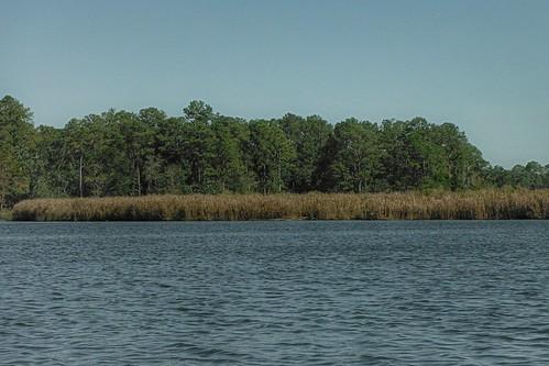 trees nature pine river woods alabama coastal wetlands marsh waterscape baldwincounty bonsecour ilobsterit