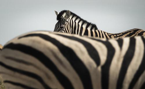 Etosha National Park | by Fotoblog.hu