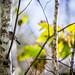 Wildlife by kingcountyparks