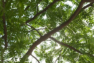 Sunlit Branches at Century College Stormwater Education Island: White Bear Lake, Minnesota 2014 | by DeepRoot Green Infrastructure