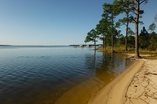 trees beach pine alabama waterscape baldwincounty ilobsterit