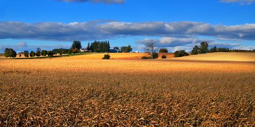 autumn ontario fall rural countryside farm farmland fields rollinghills wellingtoncounty