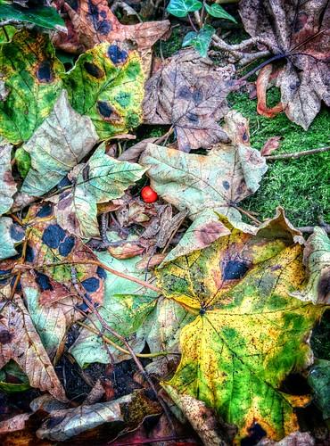 Autumn Colours (19/10/2014)