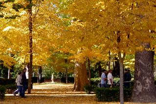 Los colores de otros otoños   by M. Martin Vicente