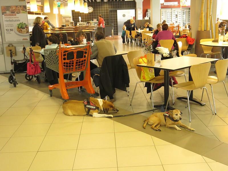 Dogs in Migros Restaurant, Langendorf