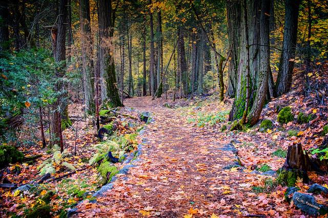 Stone Laden Trails